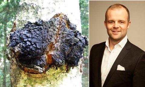 ENDELIG SUKSESS: Geir Håvard Kvalheim har gjennom snart åtte år jobbet for å utvikle kosmetikk basert på produkter fra Arktis. Bjørkesoppen kreftjuke kan nå ha blitt gjennombruddet for selskapet.