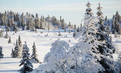 Vintermyr på Nordfjellstølen.