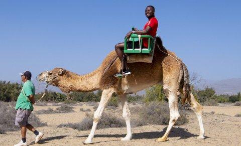 Gilbert Koomson (24) blir hyllet som Brann-lagets gledesspreder. Han mente kamel var en god ide, ikke minst for hans 50.000 følgere på Instagram!