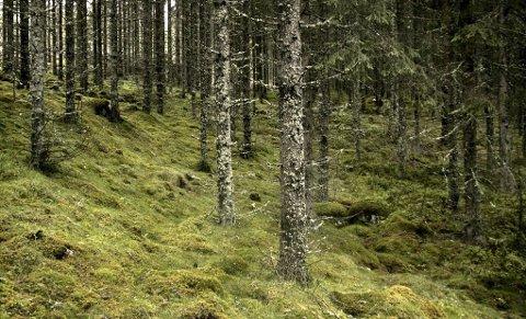 LOKAL SKATTEKISTE: Skogen gjemmer mange hemmeligheter. – Serieromanen «Over skyene» ble skrevet under ett og har handling fra Finnskogen, sier Jorunn Johansen.