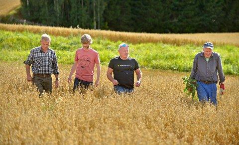 LUKER: Kornet står fint, men det er likevel ikke mer enn en middels avling, mener bøndene. Fra venstre: Jørn Richardsen, Erik Almhjell, Hans Hedenstad og Kristian Kløvstad.