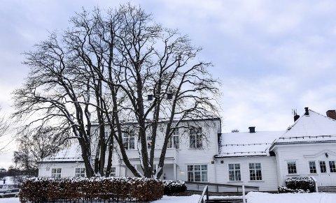 Ruver godt: De to trærne som skal ned har blitt et kjennetegn gjennom årene, og det er mange som har kost seg i skyggen på benkene mellom trærne.