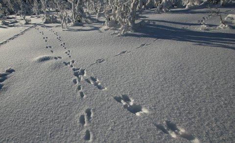 SNØRIK: Årets vinter var snørik, men kulda var ikke historisk.