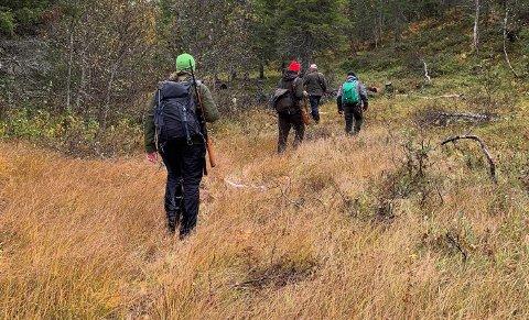 Elgjakt: I 2020 ble det lagt ned 4740 jegerdager under elgjakta i Snåsa, en oppgang på omlag 100 jegerdager fra 2019.