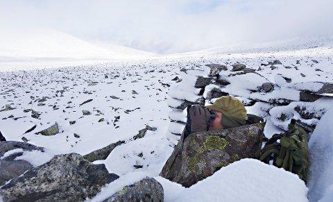 Villreinjakt: Nesten halvparten av jegerne som jaktet villrein i Sunndalsfjella og Snøhetta i høst, kom hjem med kjøtt i sekken. Her sitter en godt innpakket reinsjeger og speider med kikkert etter dyr i et hvitkledd landskap. Foto: Per Skotvedt