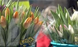 24. APRIL: Lions Horten arrangerer Tulipanaksjonen likevel.