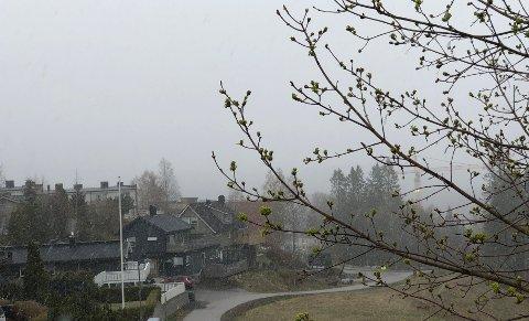 SNØILUFTA:Fra bakken ned mot Nygård på Rotnes onsdag morgen.
