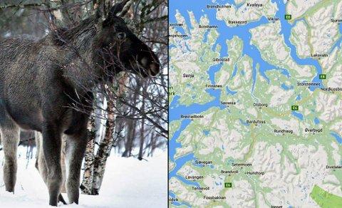 PÅ TUR: Elgen er akkurat nå på vei fra kyststrøk til innlandet. Det medfører at de krysser mange veier. Spesielt er faren stor i Målselv, Lenvik, Bardu og Lenvik. Foto: Google Skjermdump/Nordlys arkvi