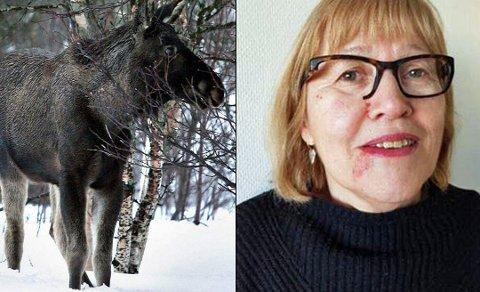 FORSLÅTT: Skadene vises tydelig i ansiktet til Randi Aukland Nilsen etter møtet med elgkua. Også brillene hennes ble knust. Bildet til venstre er ikke den elgen Nilsen møtte på.