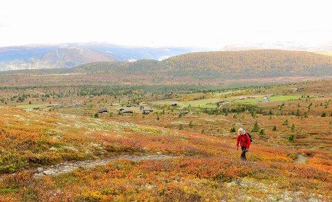 HØST: Flotte farger i fjellet i Gravdalen mellom Kvam og Vinstra i Gudbrandsdalen torsdag. Høstferieuka som går mot slutten har bydd på fint vær og ypperlige  forhold for ferierende på Østlandet.