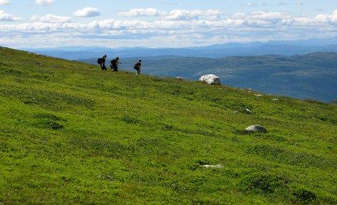 Turister på fottur i fjellheimen. Mange planlegger norgesferie også i 2021. Foto: Halvard Alvik, SCANPIX