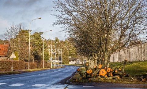 Grete Moræus Stray mener at kommunens ansatte ikke eier kunnskap om trærs betydning for miljø. (Foto: Vetle Granath Magelssen)