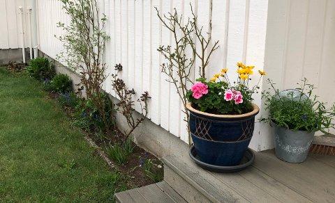 BRRR! Pass på blomstene - nå blir det kjølig.