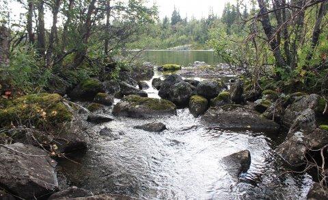 """Grytebekkosen: """"Eg ber om at det må takast ei konsekvensutgreiing for naturen i området"""", skriv grunneigar Knut Oddvar Rogne."""