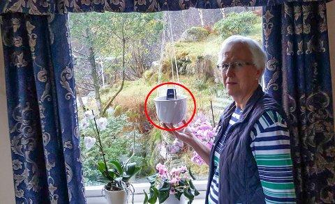 Inger Anne Bø Sellevåg er oppgitt over mobildekninga der ho bur i Gulen. For å få inn meldingar lyt ho ha telefonen hengane i ei blomsterpotte i vindauge.
