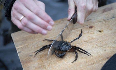 Kapp strandkrabben i to, så hiver du den opp i woken. Krabben gir god smak til suppen. FOTO: ARNE RISTESUND