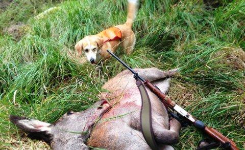 NYE AREALKRAV: Neste jaktsesong treng du ikkje meir enn 500 dekar for å ha rett til å få tildelt fellingsløyve på hjort, har Flora kommune bestemt.