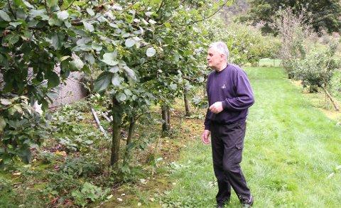 Per Gunnar Frafjord inspiserer epletrærne. Innhøstingen er ferdig for i år, men produksjonen av saft og syltetøy foregår hele året på gården.