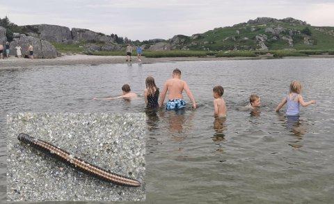 Badeopplevelsen i Ognaelva ble ikke helt den samme da det plutselig krydde av krabater som denne.
