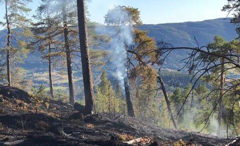 SKOGBRANN: Cirka to mål brant ned i skogbrannen i Efteløt lørdag.