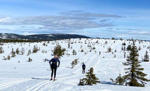 HVITE VIDDER: Det er fortsatt skiføre på Hedmarksvidda, her ved Målia i Løten.