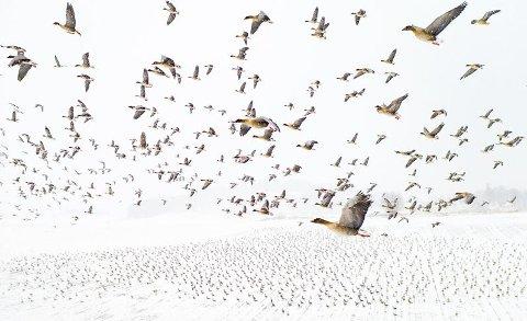 VINNERBILDE: Dette bildet sikret Terje Kolaas seier i kategorien «Aerial views of nature» i den tyske fotokonkurransen Glanzlichter.