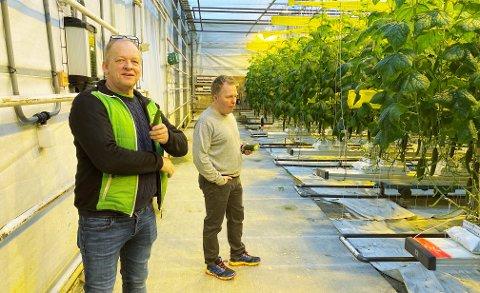 SMAKER GODT: Eier og daglig leder Johan Morten Vold (t.v.) og styreleder Stig Tore Laugen tar mer enn gjerne en smak av en helt fersk agurk.