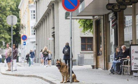 Schæferhunden Gerry (2) er parkert mens eier Mauricio Vargas er på kafe. Det kan se ut som om han kjeder seg litt. Men innimellom kommer forbipasserende bort og hilser. Til hundens store glede. – Den er veldig snill og vant til folk. Og jeg holder den under oppsikt, forteller Vargas.