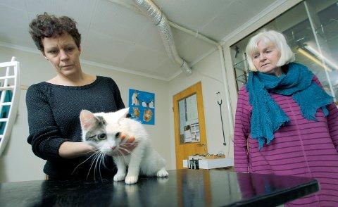 Dyrebeskyttelsen satte ny rekord i fjor for antall dyr de tok seg av. Her hjelper Mona Thorsen og Marit Fosen fra Dyrebeskyttelsen Haugaland en katt for noen år siden.