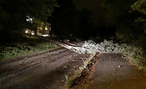 Stormen har herjet i mossedistriktet i natt, og en leser har sendt oss dette bildet etter at et tre falt over ende i Jederveien på Jeløy.