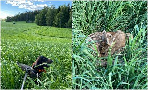 PÅ JOBB: Marta trives best når hun får gjøre det hun elsker, nemlig å søke. Til høyre er én av kalvene hun har vært med på å redde livet til.