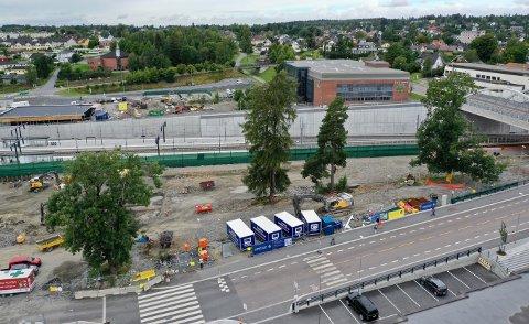 EIK: Kommunens politikere forlanger at eika (til høyre i bildet) blir bevart - enten der den står eller flyttes til Vestråtparken. De andre trærne må vike.