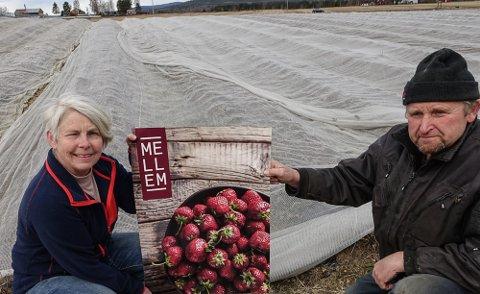 BLIR BÆR: – Det kommer til å bli mye bær her i sommer. spørsmålet er om vi får noen til å plukke, eller om det kommer til å råtne på rot, sier Eva Molberg og Olav Berg.