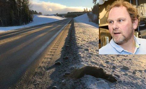 – TRIST: Altfor mange dyr blir skadet og drept på riksvei 7 mellom Ramsrud og avkjøringen til Heggen, mener Håvard Rustad (innfelt). Han etterlyser viltgjerder.