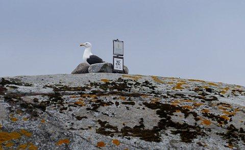 FORBUDT: Denne måken hadde plassert seg godt – og tett inntil forbudsskiltet – på Marøyskjær i Lahellefjorden søndag 14. juli, helt på tampen av sesongens ferdselsforbudsperiode. Mon tro måken visste at den i perioden har rett til å ha skjæret i fred?