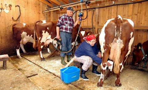 På raudlista: Budeie Astrid Sebuøygard og budeikall Knut Sebuøygard, her avbilda under mjølking i stølsfjøset på Lien i Rogne i fjor haust. Kjem dei på verdsarvlista til UNESCO?Foto: Helge Gudheim