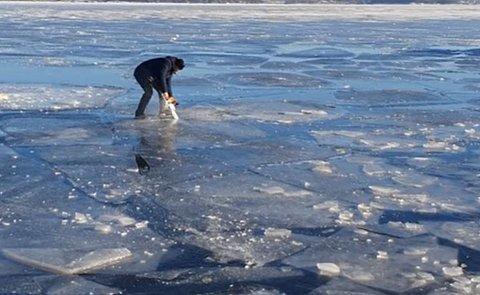 Jørn Vesthaug tok med seg motorsagen ut for å sjekke tykkelsen på isen på Drammenselva søndag ettermiddag. – Vi hadde full kontroll, men det er farlig på isen om dagen, sier han.