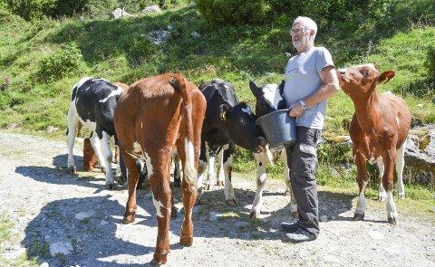Pensjonert mjølkebonde Svein Hjelmeland ber folk visa varsemd og ikkje oppsøka dyr som beitar.