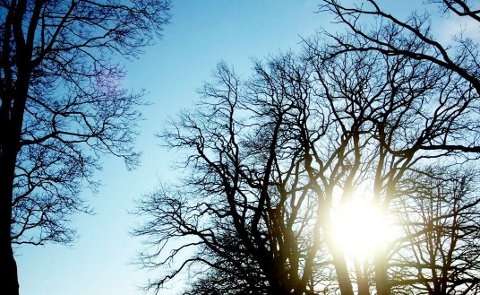 REKORD: Den forrige varmerekorden for desember i Vestfold ble satt for nesten fem år siden, 2. juledag 2011. Da ble det målt 13,3 varmegrader i Kilen i Tønsberg. I går ble den rekorden slått på syv forskjellige målestasjoner i fylket.