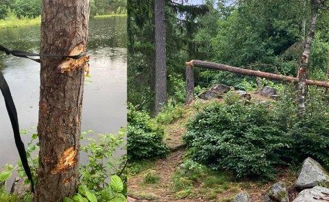 TRÆR FIKK UNNGJELDE: Dette synet møtte Lisa Kvål da hun skulle bade.