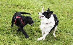 KAN SNUSE: Mattilsynet opphever rådet om å begrense nærkontakt mellom hunder.