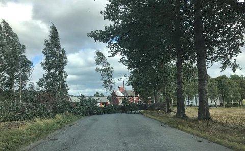 SPERRET VEI: Dette treet sperret veien ved Bærbyveien fredag ettermiddag.