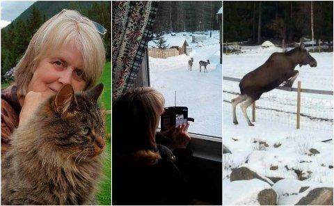 FOTOVINNER: Gerd Kari Moen er dyrenes venn, om det er katt, rådyr eller elg, spiller liten rolle. Fotomontasje: Privat