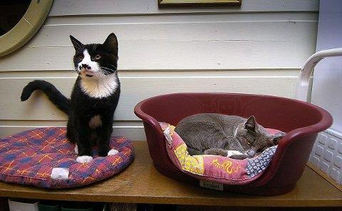 HJEMLØSE DYR: FOD-gården tar hånd om hjemløse katter og hunder og prøver å finne nye hjem for de firbeinte.