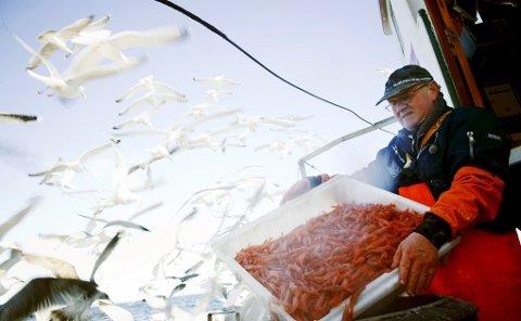 GODE PRISER: Rekefiskerne i nord kan forvente gode priser. I sør blir kvotene kuttet.