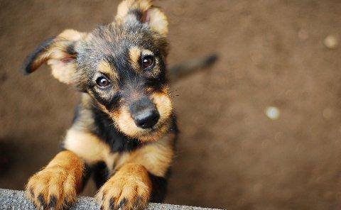 Å gi kjæledyr i julegave er ingen god idé. Husk at det å få et dyr som nytt familiemedlem gir mange gleder, men også mange forpliktelser for at dyret skal ha det godt. Foto: NTB scanpix/Shutterstock