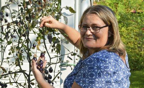 Lille: De er lilla, små og avlange, og minner ikke så mye om tomatene i grønnsakdisken. I Helene Orskaugs hage kan man telle 70 sorter tomat, i nær sagt alle farger og fasonger.