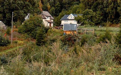HALVPARTEN: Grunneierne på Haugen ønsker å regulere 13 dekar av eiendommen til boligformål. Dette er gårdstunet, som man ønsker å beholde som i dag.