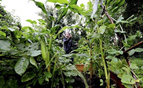 FRODIG: Skal du gjøre klart til grønnsakhage denne våren? Grønnsakdyrking på liten plass i urbane strøk er et økende konsept i verden. Folk synes både det er viktig og morsomt å dyrke mat der de bor. Her eksperimenterer Jennifer McConachie i egen hage.