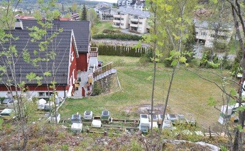 BOLIGNÆREBIER:Fra bigården i Snarefjellet der bienes flykorridor går rett over flere bolighus, blant annet Ole Banggrens hus, som ligger midt i bildet i bakgrunnen.